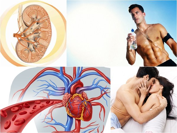 Đông trùng hạ thảo bổ thận tráng dương - Tăng cường sinh lý nam