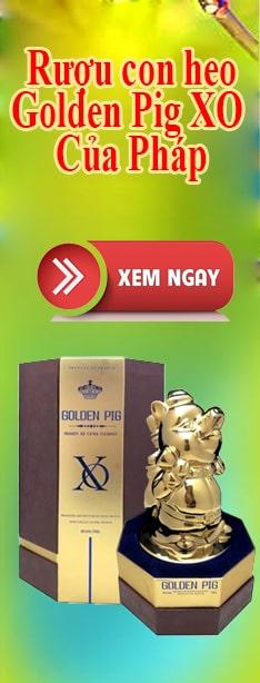 Rượu con heo Golden Pig XO